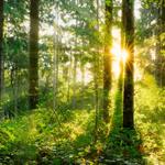 山 〜「生い茂る針葉樹林と深い森の中」をイメージしたプログラム〜