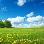 ヒーリング 〜「草原を駆け抜ける風」をイメージしたプログラム〜